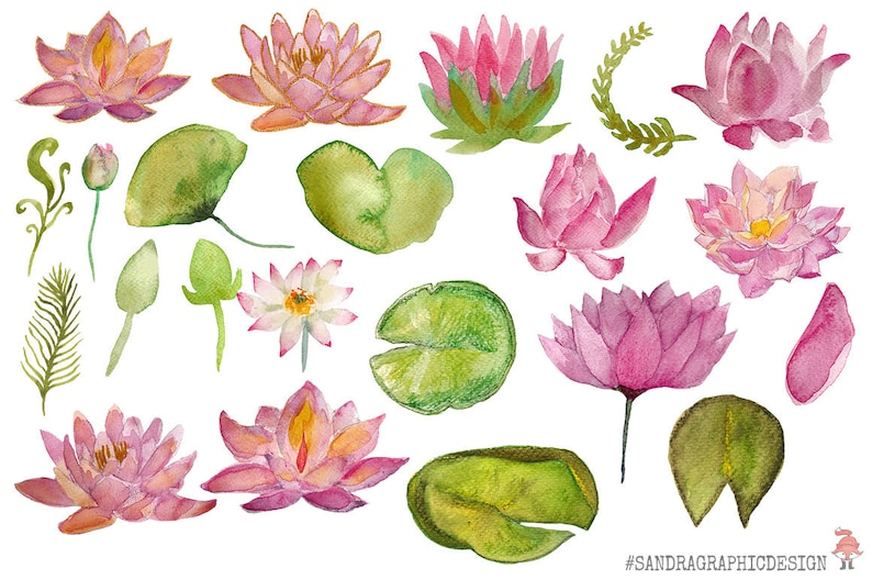 Lotus Flowers Clip Art Hand Painted Watercolor Floral Clip Etsy