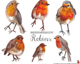 Robin clip art, watercolor robins painted by hand, birds clip art,  6 clipart 300 dpi PNG  files (5227)