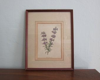 Vintage Botanical Framed Picture Mirbelia Floribunda Purple Green