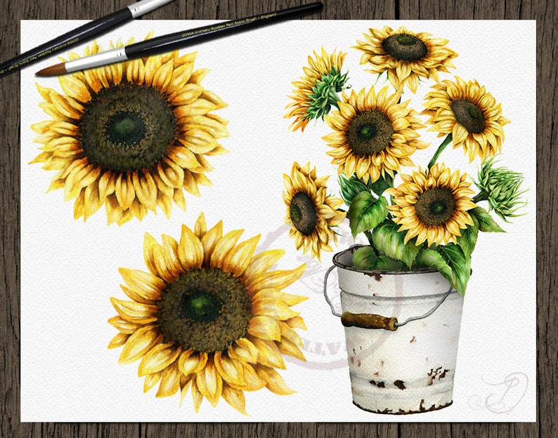 Watercolor Sunflower Clipart Clip Art Summer Sun Flower   Etsy