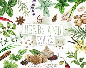 Watercolor Herbs Spices Clipart Clip Art Condiment Herb Spice Illustration Decor Kitchen Wall Home Decoration Italian Food Cooking Culinary