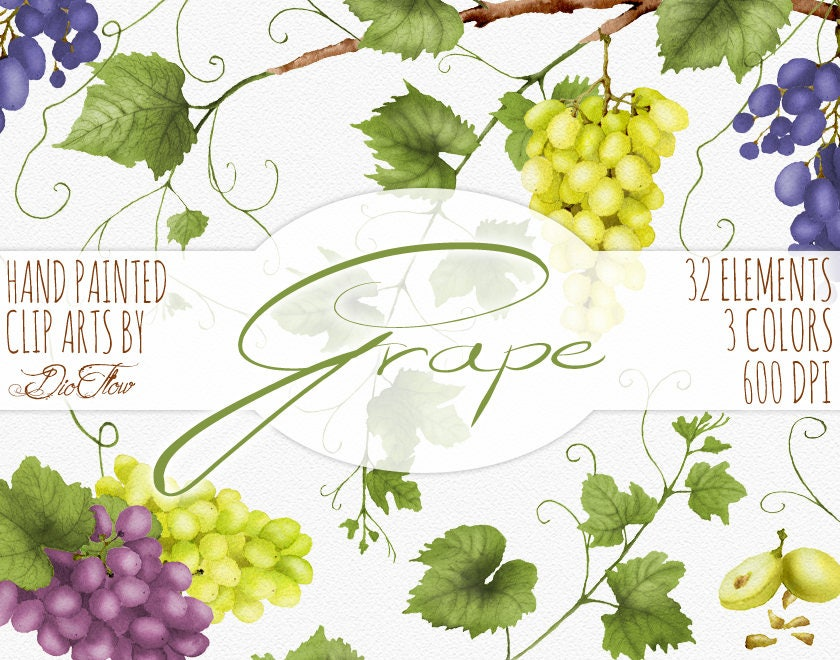 Trauben-Clipart-Aquarell-Trauben Wein Clip-Art Grün ranken | Etsy