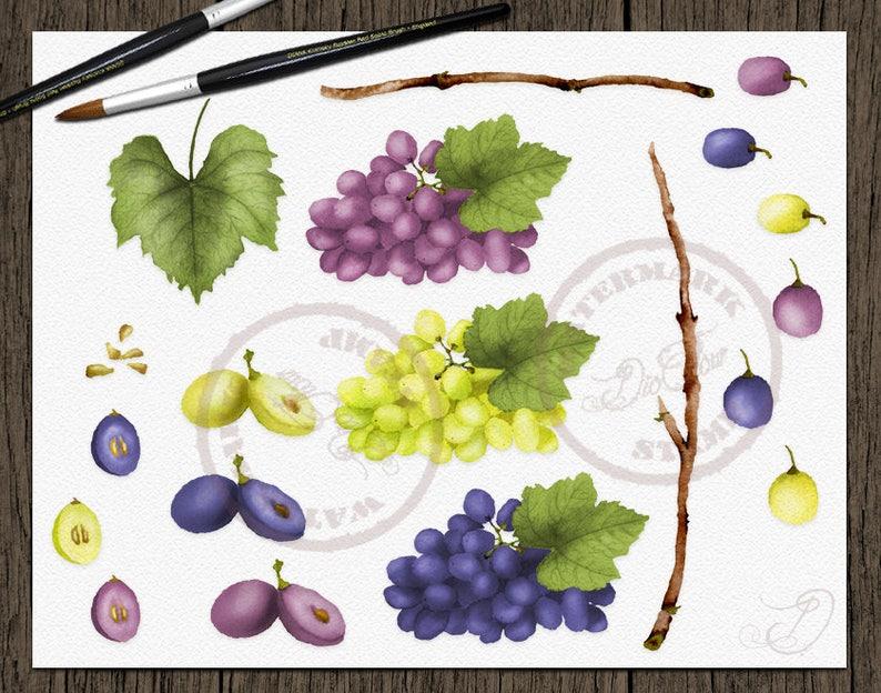 Grape Grapes Clipart Watercolor Grape Wine Clip Art Greenery Vines Leaves Vineyard Green Vinery Grapery Fall Fruits Vector Invitation