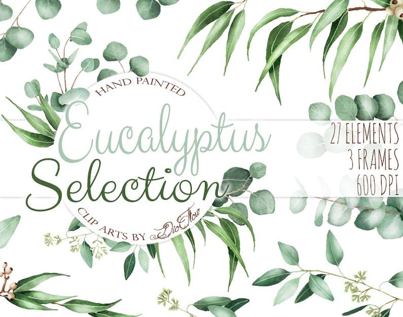 7687344eecba Watercolor Eucalyptus Clipart Greenery Clip Art Eucalyptus