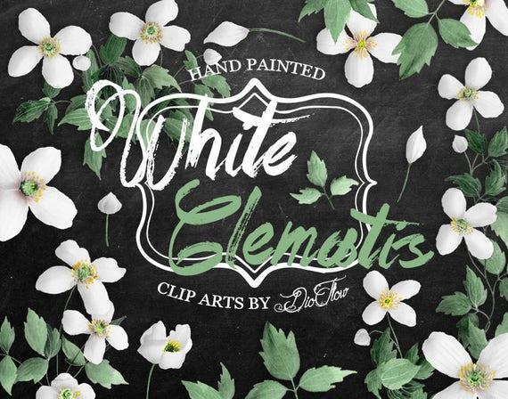 Clematis Clipart Weiss Blume Clip Art Rustikal Aquarell Etsy