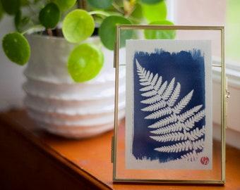Cyanotype, fern, nature, unique, alternative photography