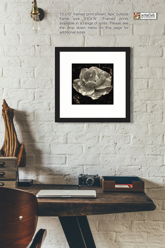 Framed print ~ Raindrop Rose ~ matted fine wall print Hahnemühle artist paper museum quality giclée archival materials Artsfish Studio