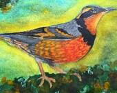 Thrush Bird Painting, Var...