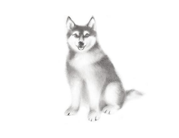 Dog Drawing Husky Sketch Pencil Animal Print Puppy Etsy