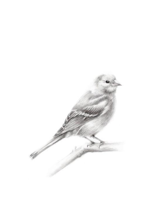 Uccello Di Disegno A Matita Bird Stampa Artistica Disegno Etsy