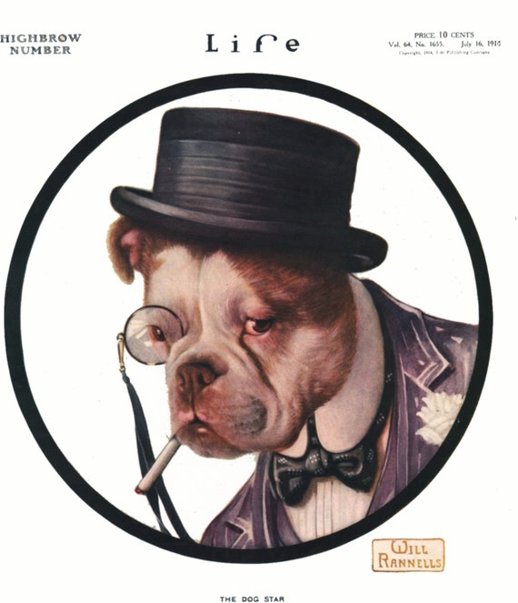 bulldog with top hat