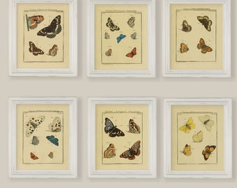 Vintage Butterflies Reproductions Prints Natural History Set of 6 Size 8x10 in