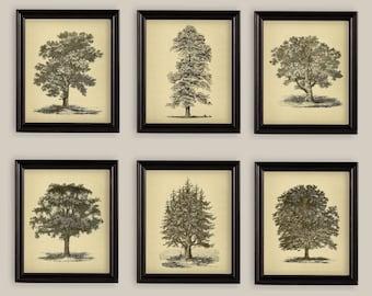 Vintage Trees Oak Spruce Elm Beech Cypress Set Of 6 Botanical Prints Gallery Wall Sizes A4 5x7 or 8x10