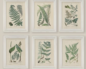 Set Of 6 Botanical Fern Prints Gallery Wall 5x7 or A4