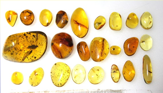 Wholesale Lot of 24 Amber Insects Flys Bugs Spiders Fossils, biggest one 48mm highresolution photo
