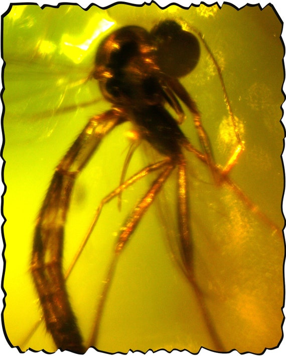 Outstanding Dominican Biggest  Dragonfly or Mosquito insect fossil Beautiful Natural Amber polished stone 20mm