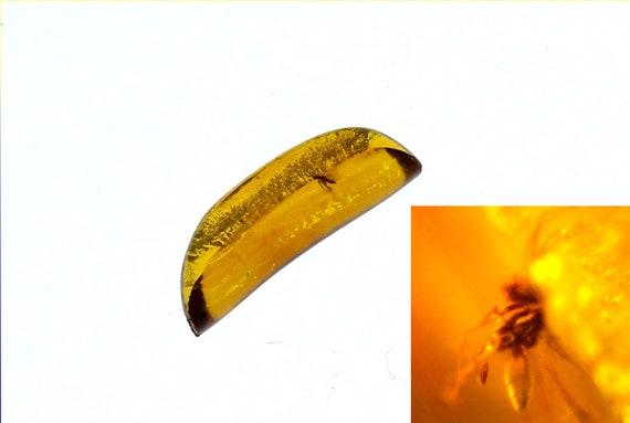 Frozen in Time 50 Mio years old Dominican Natural Amber Flying Insect Mosquito Fossil Stone 15mm
