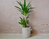 Ancient planter, ceramic sandstone pot. Circa Alsace 1900