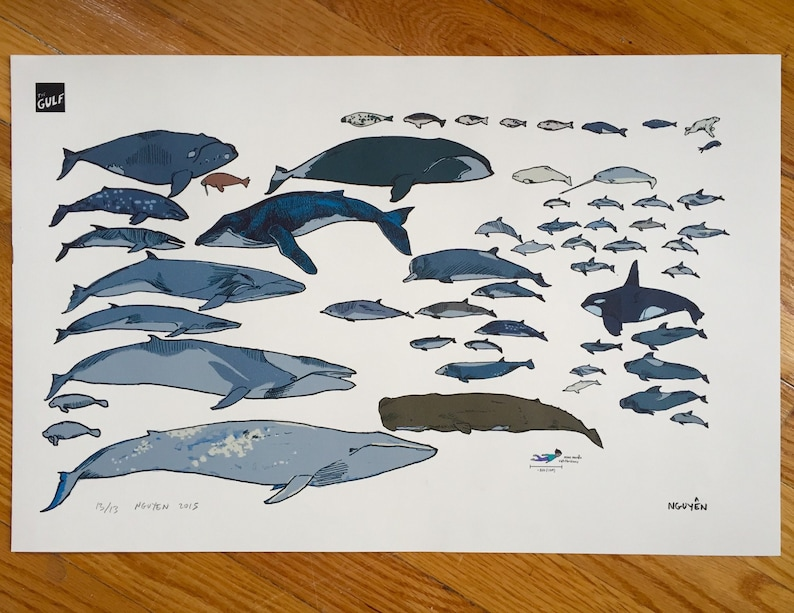 Whale Print: Sea Mammals of the North Atlantic image 0