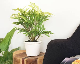 SALE & LAST ONE - Large House Plants for Barbie and Fashion Dolls