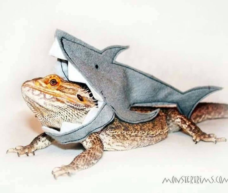 Shark outfit clothing for bearded dragons and other small image 0