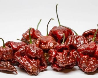 Chocolate Trinidad Scorpion Chile Seeds -  Summer 2017 Crop  ORGANICALLY GROWN