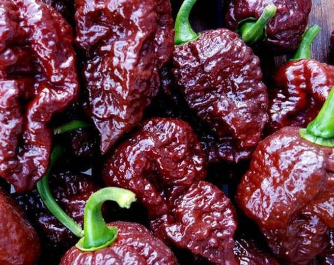 Big Black Mama Pepper Seeds - Summer 2017 Crop  ORGANICALLY GROWN