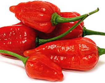 Red Ghost  (Bhut Jolokia) Pepper Seeds - Summer 2017 Crop  ORGANICALLY GROWN