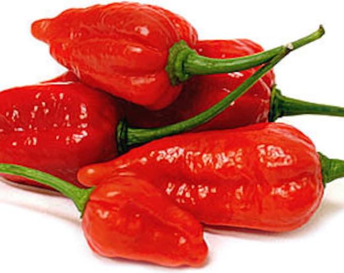 Red Ghost  (Bhut Jolokia) Pepper Seeds - Summer 2017 Crop  ORGANICALLY GROWN