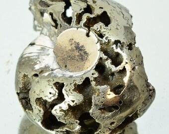 RUSSIA Polished PYRITE AMMONITE Fossil Jurassic pendant paleontology 100 grams #11794