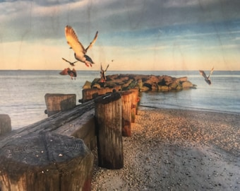 Wood Taking Flight