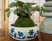"""Flower sometsuke 染付, Japanese Ceramic deep Bowl, good for Medium Kokedama.  Size: 6"""" diameter, 2.5 inch height."""
