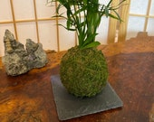 """Square Small Slate plate black made by natural stone, 4 x 4 x 0.25""""H. Great decoration for Bonsai, Kokedama, wafu atmosphere."""