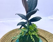 Rubber plant arranged wit...