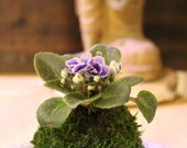 Mini African Violet Koked...