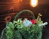 Succulents Moss deco purs...