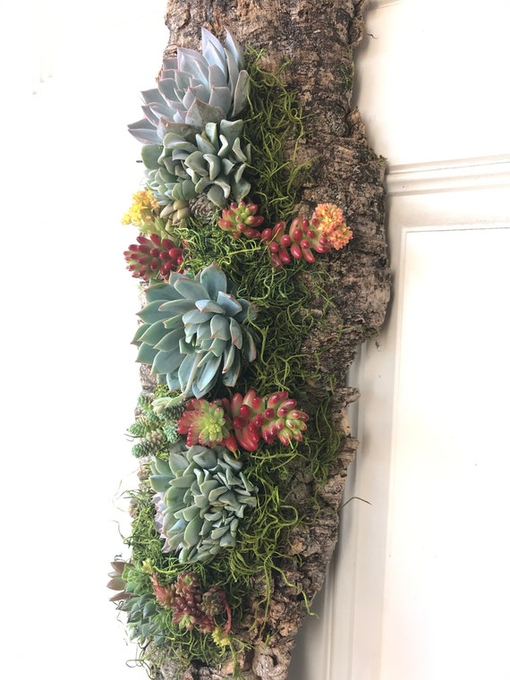 Vertical Wall decoration with assorted succulents on the cork board, Size approx 8 x 19 inch, live succulents and moss wall art