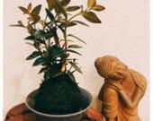 Gold Fish Kokedama - Moss ball - Japanese Living Art