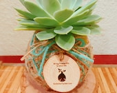 Echeveria Kokedama - Moss ball with Echeveria Succulent comes with engraved sliced wood message from kodama forest.