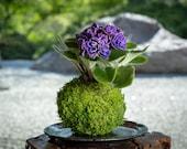 African Violet Kokedama - Moss ball, purple African Violet! Keep bloom perennial flowering plants.