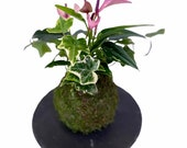 Pink (purple) Anthurium Kokedama with I by, Bonsai Moss Ball, beautiful soft purple color. Peaceful, healing, filles with love gift.