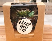 Gift box mini kokedama! Moss ball with assorted succulents in the giftbox.