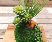 Kokedama - Artifitial plant Kokedama Arrangement, succulent arrangement.
