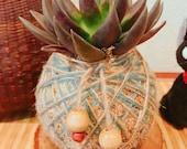 Echeveria Black knight Succulent Kokedama - Moss ball