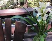 "Pure White Bromeliad Kokedama - Moss ball, Japanese indoor garden technique ""Kokedama"""