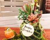 "Assorted Succulents Kokedama 3"" - Moss ball, Jute twine wrapped. Custom engravimg message availble."