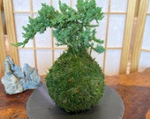 """Round Slate plate black made by natural stone, 8"""" diameter. Great decoration for Bonsai, Kokedama, wafu atmosphere."""