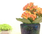 10pcs of assorted Kalanchoe Kokedama for your event, gift, and special occasion.