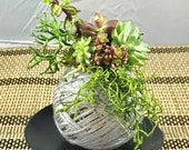 Assorted Succulents Kokedama - Moss ball, twined with yarn.  Custom engravimg message availble with request.