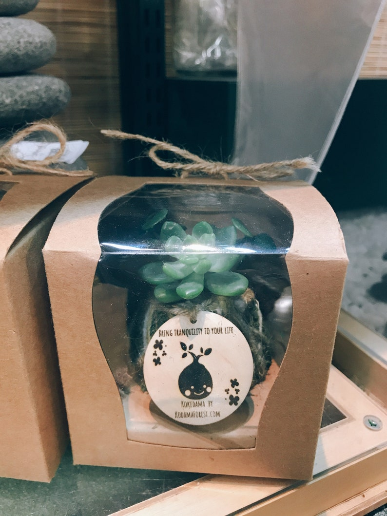 Moss ball with assorted succulents in the giftbox. Gift box mini kokedama